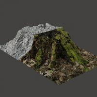 3D Scan of Stump Tree #1