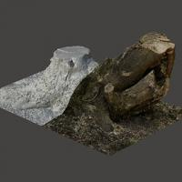 3D Scan of Stump Tree #2