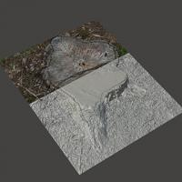 3D Scan of Stump Tree #4