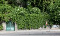 wall fence overgrown 0001