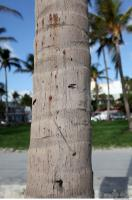 tree palm bark 0003