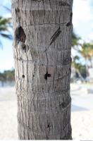 tree palm bark 0004