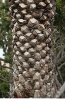 palm tree bark 0003