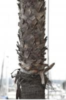 palm tree bark 0002