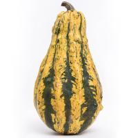 Photo Textures of Pumpkin Hokkaido