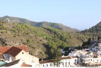 background forest Frigiliana 0002