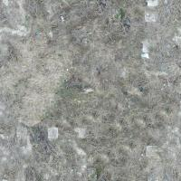 seamless ground grass dead 0001