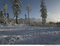 background forest winter 0002