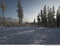 background forest winter 0003