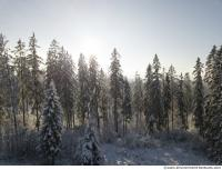 background forest winter 0008