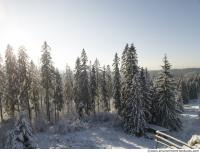 background forest winter 0009
