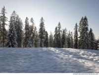 background forest winter 0019