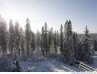 background forest winter 0016
