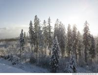 background forest winter 0007