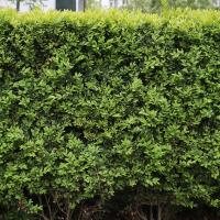 Photo Textures of Hedge