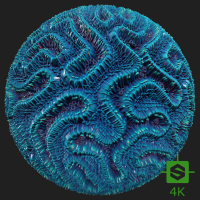 PBR Texture of Coral