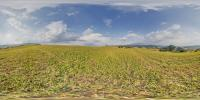 Panorama HDR  360° background nature