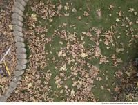 ground grass leaves dead 0002