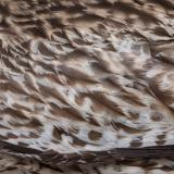 Photo Textures of Animal Skin