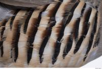 animal skin feather 0001