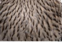 animal skin feather 0011