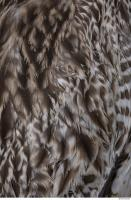 animal skin feather 0022