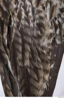 animal skin feather 0023