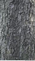 wood tree bark 0002