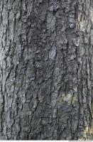 wood tree bark 0003