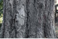 wood tree bark 0004
