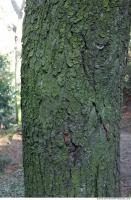wood tree bark 0005