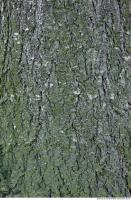wood tree bark 0006