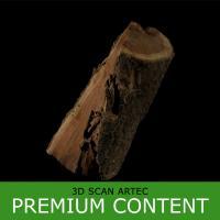 3D Scan of Tree Wood #4