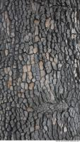 wood tree bark 0010