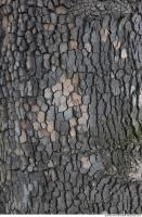 wood tree bark 0011