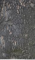 wood tree bark 0012