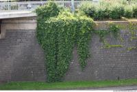 wall overgrown ivy 0002