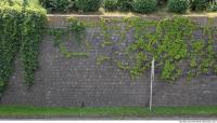 wall overgrown ivy 0004
