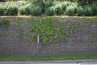 wall overgrown ivy 0005