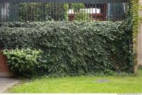 wall overgrown ivy 0010
