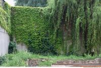 wall overgrown ivy 0011