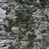 Overgrown Walls Stones