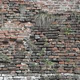 Wall Bricks Overgrown