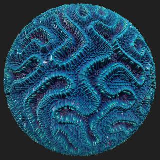 Coral PBR