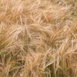 Plant Fields
