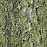Seamless Tree Bark